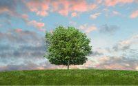L'écologie au coeur de la publicité